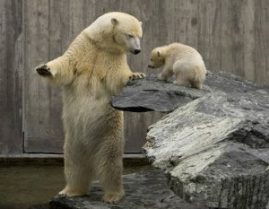 polarbear_mother